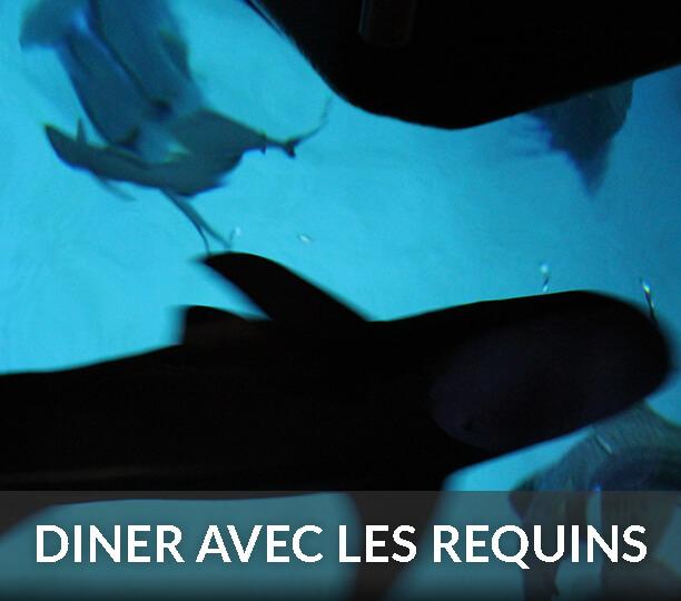 soirée romantique requins