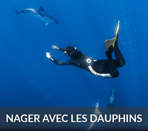 nage dauphins